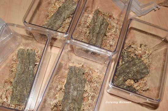 사슴벌레 성충 개별사육 셋팅