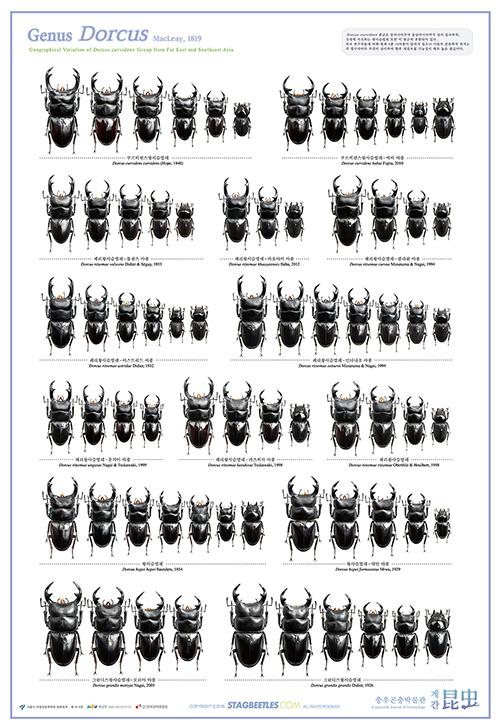 세계 사슴벌레 & 장수풍뎅이 포스터